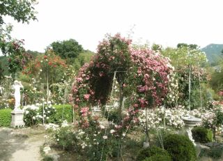 広島バラ園庭