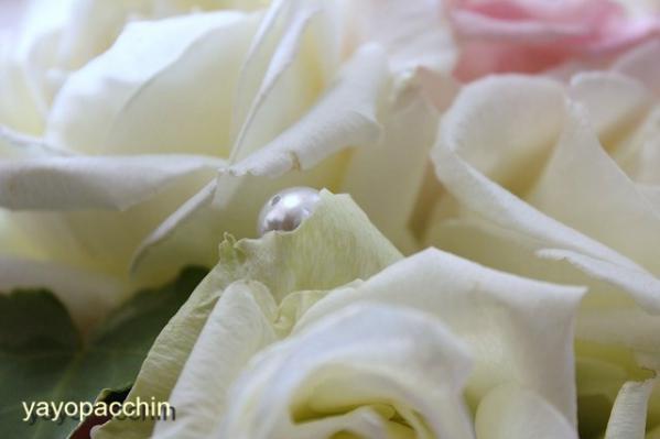 2_20110102185951.jpg