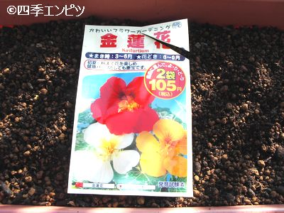 20100429 ナスタチウム 種蒔き