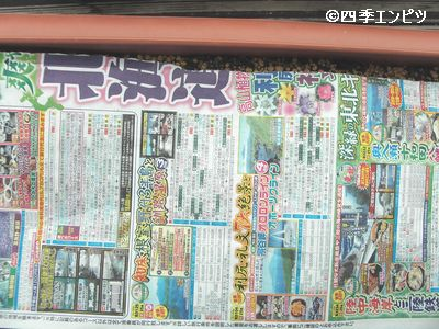 20100508 ナスタチウム 新聞紙