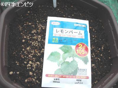 20100613 レモンバーム 種蒔き