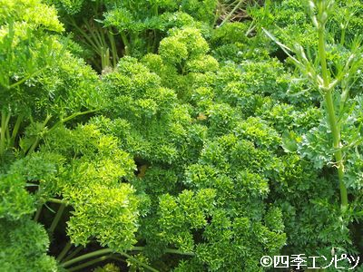 201006 生活の木 薬香草園 11