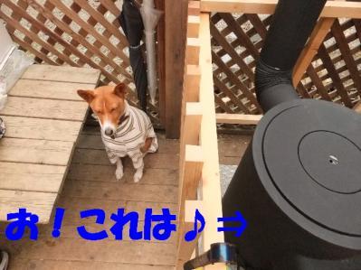 1b20111119 031