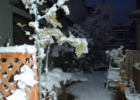 初雪 011-001