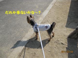 お散歩は?