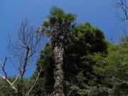 田舎の家と南国の樹