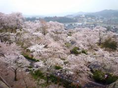 鶴山公園 その6