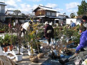 植木の展示販売