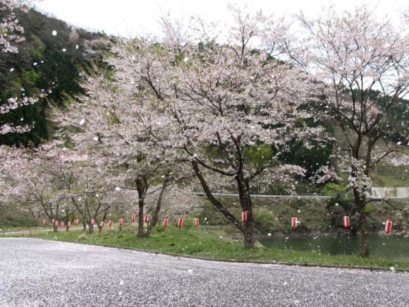 桜吹雪が!