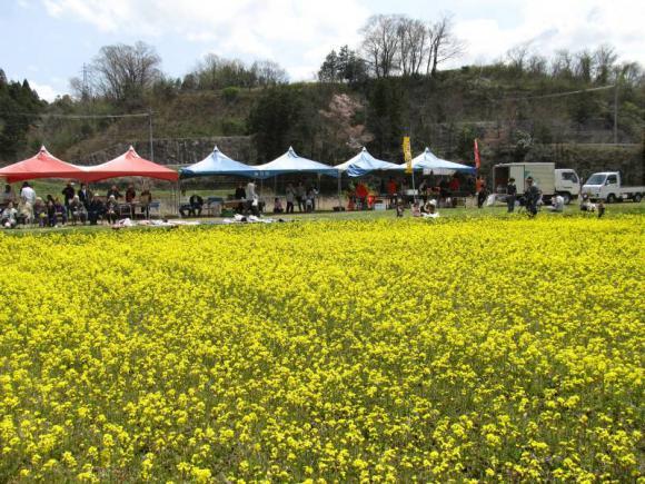 勝田の菜の花まつり