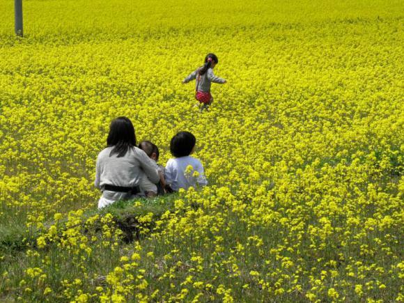 菜の花畑の中を駆ける少女