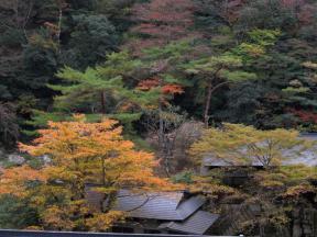 その奥にも風情ある建物とイチョウの樹が