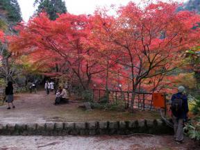 遊歩道の紅葉 3