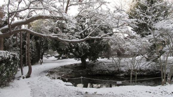 木々が雪の花をつけています