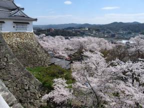 備中櫓と桜と津山市街地