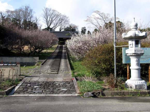 旧家に咲く梅