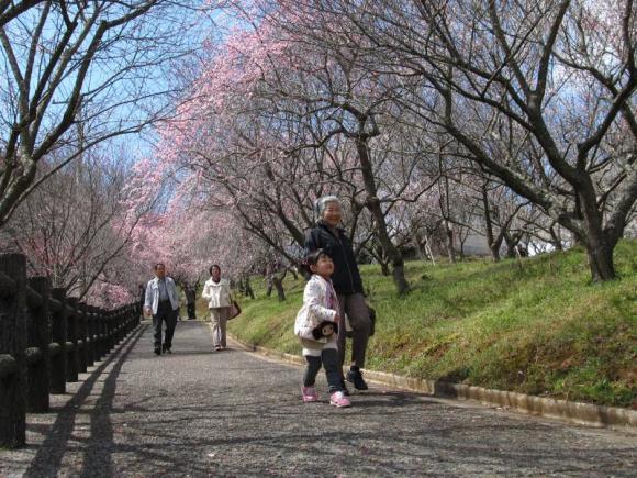 梅の花のトンネル