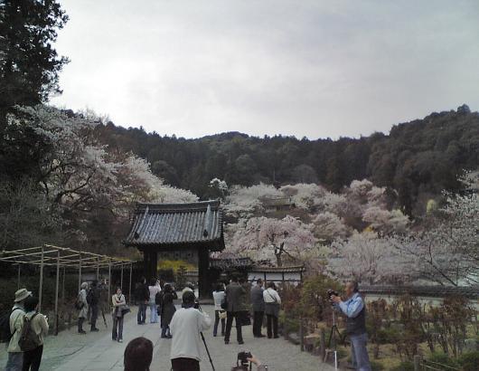 長谷寺遠望