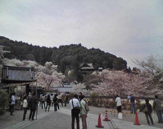 長谷寺(遠望)