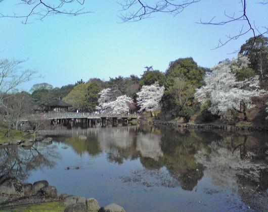 鷺池(サクラ)