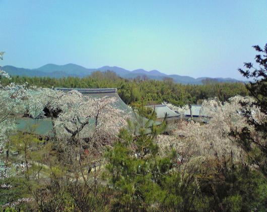 望京の丘から多宝殿を望む
