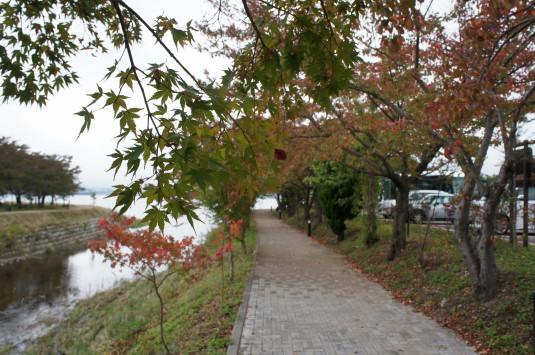 紅葉残念 河口湖 湖畔