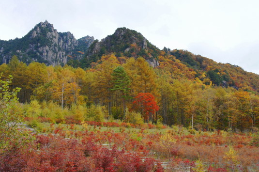 紅葉 みずがき山 到着