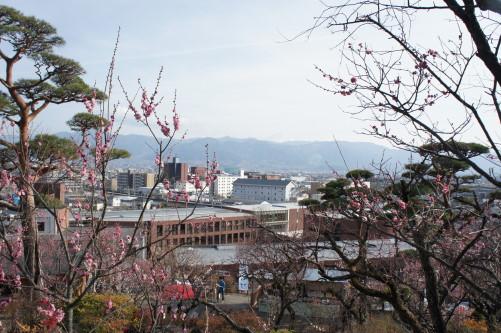 不老園 梅と富士山
