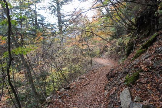 紅葉 西沢渓谷 森林軌道
