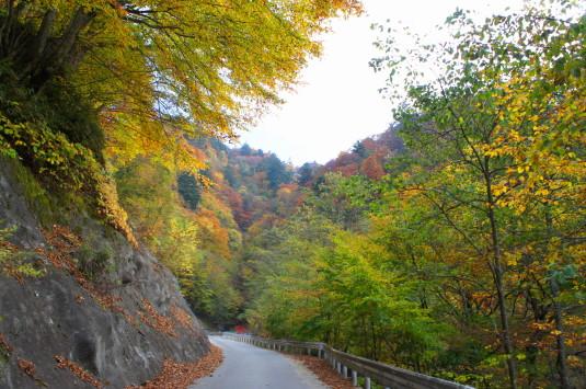 紅葉 上日川峠 登り道