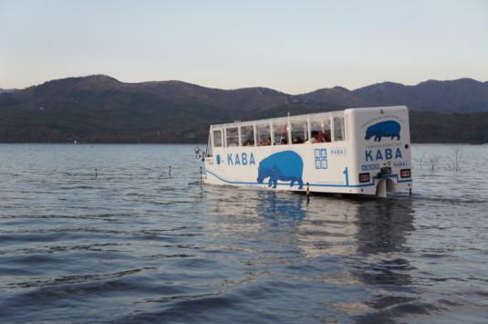 紅葉 山中湖 カバ