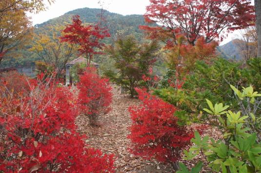 紅葉 みずがき湖 ビジターセンター