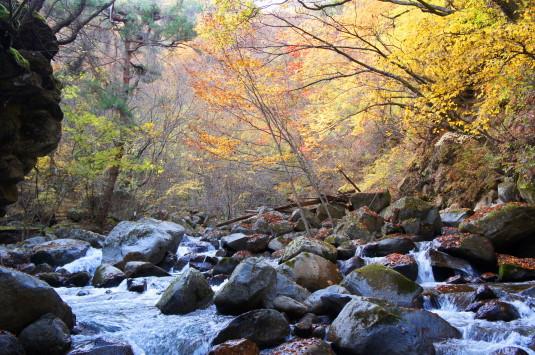 紅葉 竜門峡 川と紅葉