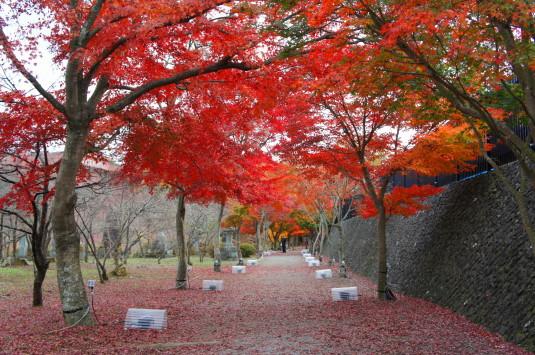 紅葉 富士吉田 民俗博物館