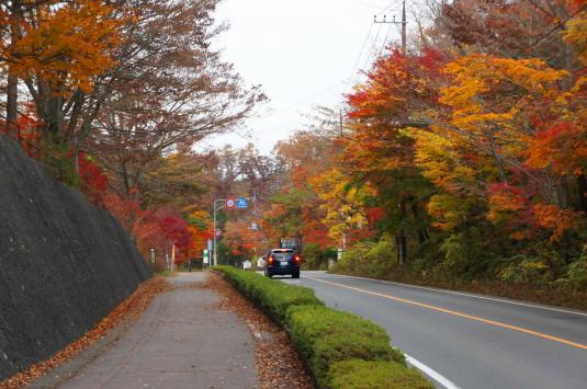 紅葉 山中湖 道路