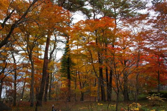 紅葉 山中湖 やまぶき色の森