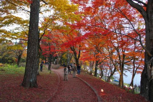 紅葉 山中湖 遊歩道