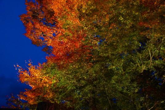 紅葉 山中湖 ライトアップ 色どり