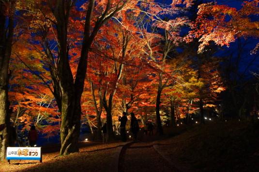 紅葉 山中湖 ライトアップ 撮影ポイント