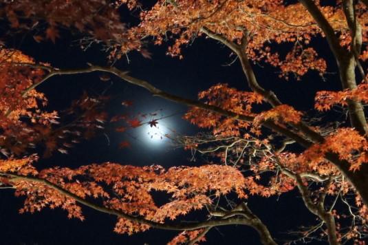 紅葉 山中湖 ライトアップ 月アップ