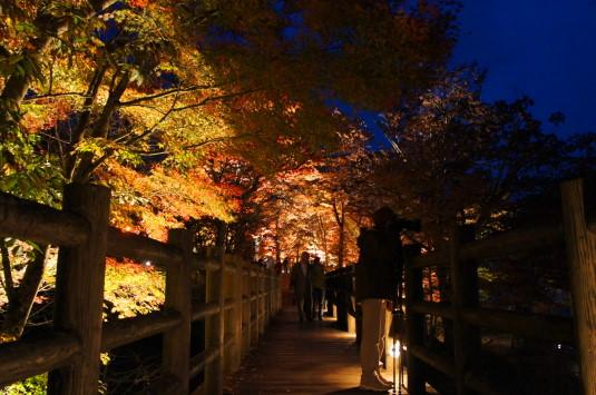 紅葉 山中湖 ライトアップ 恋人橋