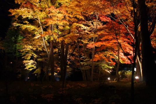 紅葉 山中湖 ライトアップ やまぶき色の森