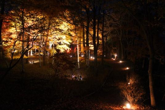 紅葉 山中湖 ライトアップ 遊歩道