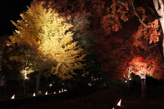 紅葉 河口湖 ライトアップ 入口