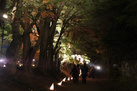 紅葉 河口湖 ライトアップ 回廊
