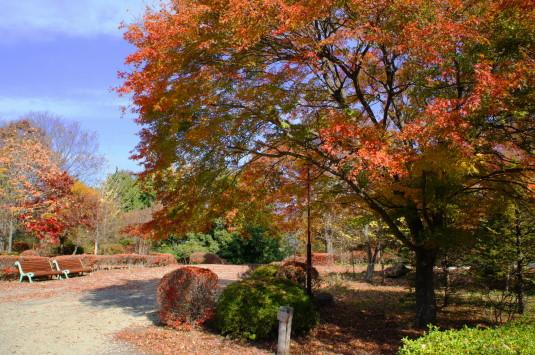 紅葉 武田の杜 森林学習展示館 紅葉