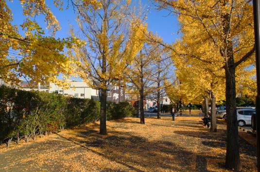 紅葉 芸術の森 いちょう