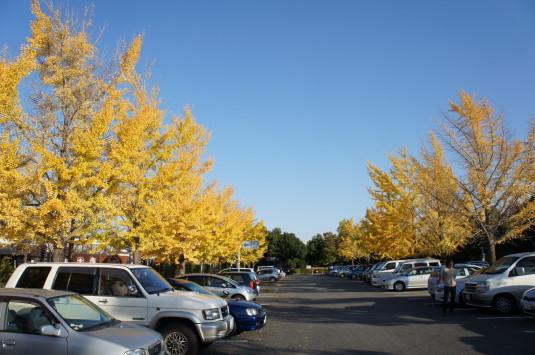 紅葉 芸術の森 駐車場