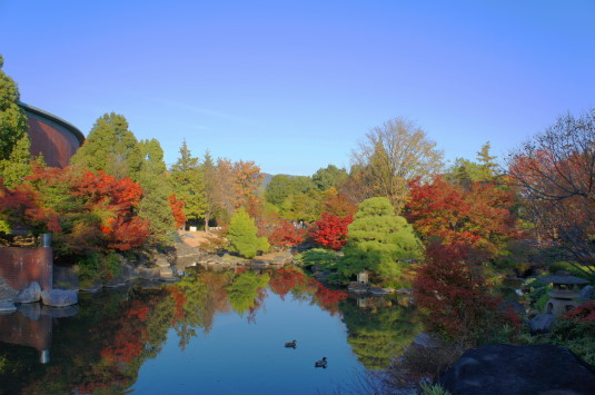 紅葉 芸術の森 池