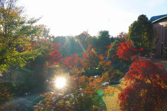 紅葉 芸術の森 逆光